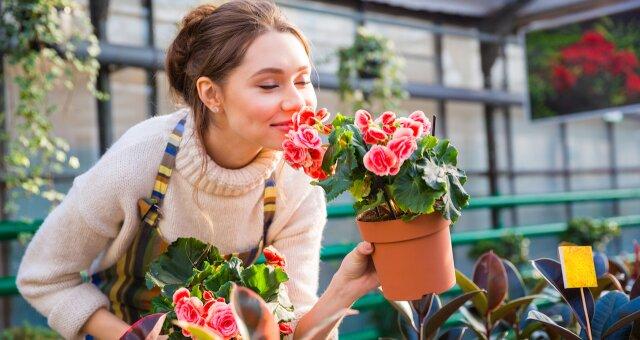Комнатные цветы, которые принесут успех в карьере по фен шуй