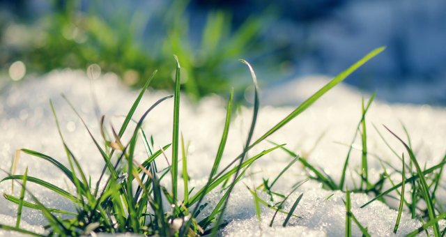 Nature___Seasons___Spring__Early_grass_from_under_the_snow_in_spring_069165_