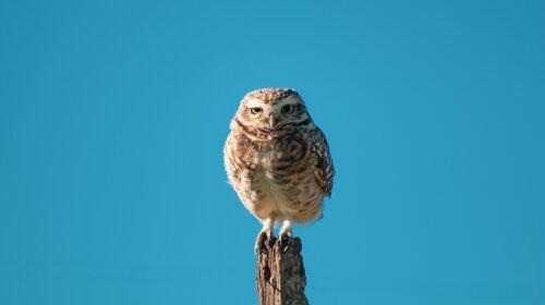 Очаровательные совы: лучшая подборка фото милых и смешных сов