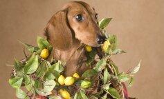 Сеть рассмешила реакция собаки на кислый лимон (фото и видео)