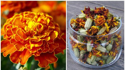 Квіти чорнобривці: рецепти настоянок