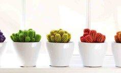 кактусы, разноцветные кактусы, яркий интерьер