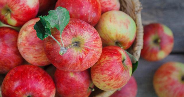 Полезные свойства яблок тоже оценили по достоинству