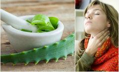 Комнатные цветы, которые лечат болезни горла