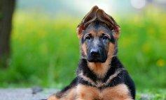 Породи собак, собаки
