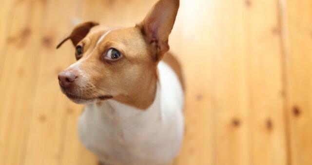 В США родился щенок дога с шерстью зеленого цвета