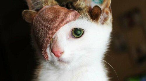 Кот с одним глазом и четырьмя ушами