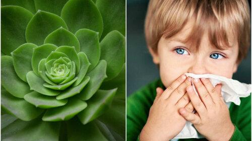 Кімнатні квіти, які допоможуть вилікувати нежить