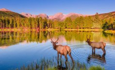 rocky-mountain-national-park-elk-fawn-copy