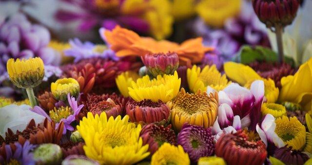 Как выбрать и продлить жизнь букету цветов