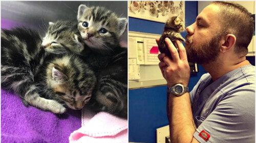 Історія порятунку: чоловік врятував трьох кошенят, і вони вирішили, що він їх мама