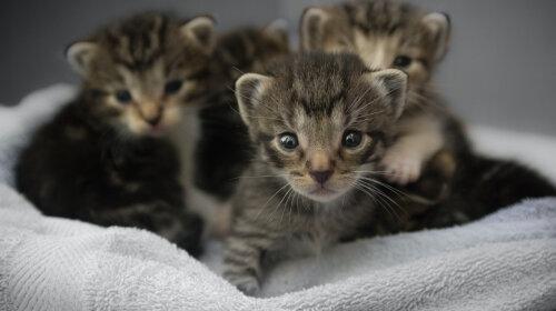"""Новонароджені кошенята або """"кототерапія"""": котиків багато не буває, особливо маленьких кошенят (фото)"""