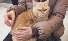 Грозный кот изменился до неузнаваемости, когда у него появились новые хозяева (ФОТО)