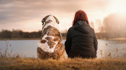 Чи розуміють собаки мову людини