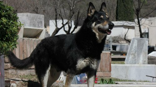 Реальный Хатико: история собаки, которая не покинула хозяина