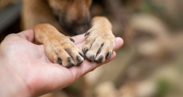 Как выглядит самая старая собака в Украине
