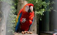 Археологи знайшли останки папуги-канібала, який виявився розміром з чотирирічну дитину (ФОТО)