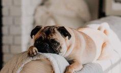 """Сеть покорил пес, который увидел, как """"оперируют"""" его игрушку (фото и видео)"""