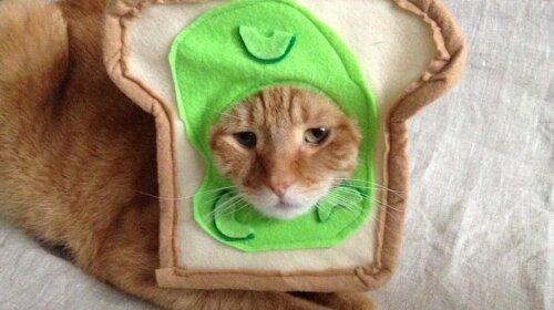Мережу насмішили кошенята, яких одягнули в костюми до Геловіну (ФОТО)