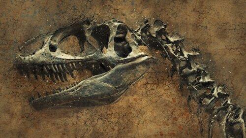 Ученые обнаружили животное, которое жило еще при динозаврах. Этот вид сохранился до сих пор