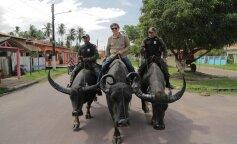 Дмитрий Комаров оседлал буйвола и съел самый страшный гастрономический деликатес Бразилии