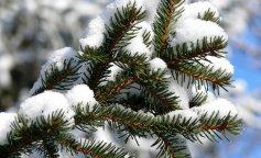zima-holod-moroz-elka-vetka