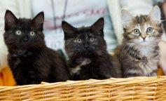 Совсем скоро появится вакцина от аллергии на кошек