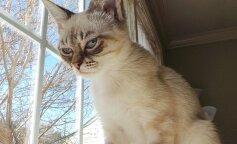 Похмурий кіт кардинально змінився, коли в нього з'явилися господарі: фото до і після
