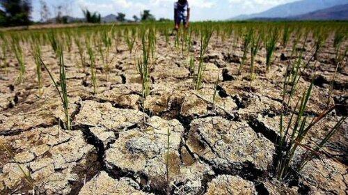 В ООН передрекли початок великої посухи на планеті: голодувати будуть всі