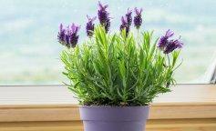 7 комнатных растений для здорового сна: очищают воздух и украшают спальню
