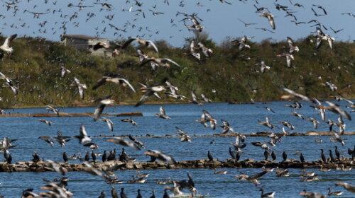 Коронавирус: пандемия изменила поведение птиц (ВИДЕО)