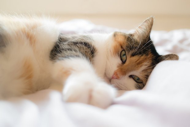 Кошачий кодекс: 15 обязанностей кота по дому