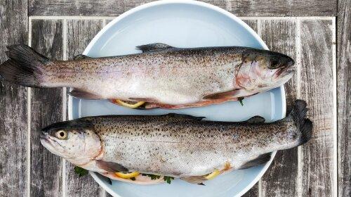 У Мережі з'явилося фото унікальної риби з двома ротами (ФОТО)
