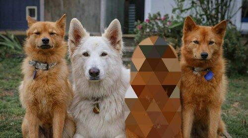 """""""Викликайте екзорциста"""": собака придумала химерну позу для фотографій, яка стала її """" фішкою"""""""