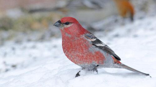 Тест на твое ближайшее будущее: выбери одну из птиц и узнай, что ожидает тебя в будущем