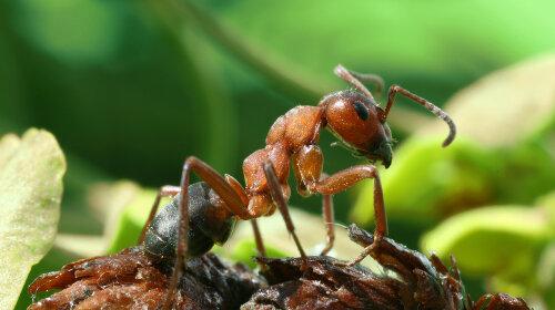Животные и насекомые, которых люди едят живьем