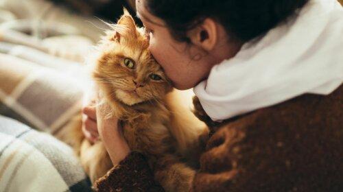 Породы кошек, которые нужно завести малоподвижным людям