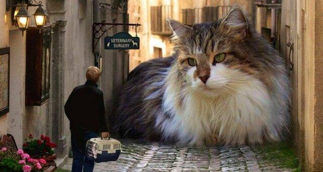 Как выглядит самая большая домашняя кошка в мире