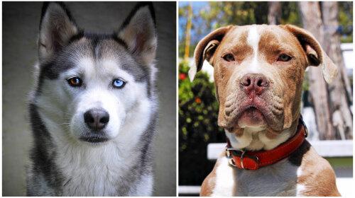 Як виглядають собаки від схрещування несхожих порід