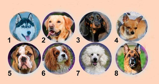 Тест на характер: какая собака тебе нравится?