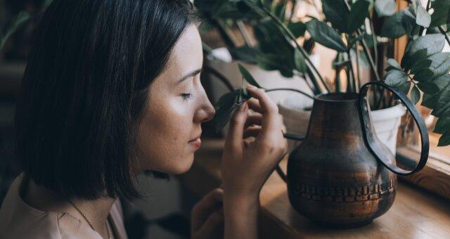 Кімнатні квіти, які допоможуть при закладеності носа