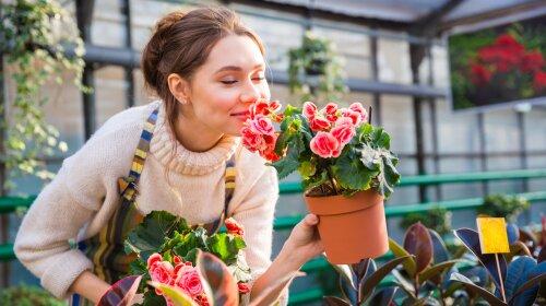 Кімнатні квіти, які принесуть успіх у кар'єрі по фен шуй