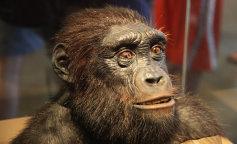 Ученым удалось скрестить эмбрион человека и обезьяны