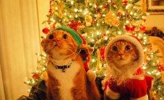 popular-seasonal-luxury-christmas-trees-canada-christmas-trees-kansas-city-christmas-trees-kelowna-c