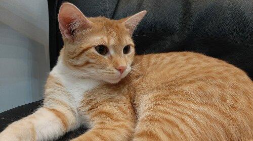 Суровые коты: смешно и пугающе, подборка фото