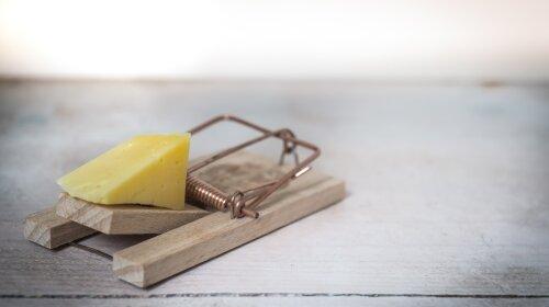 Можно, но осторожно: медики рассказали о вреде сыра для организма