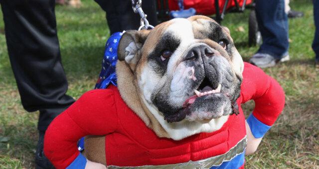 Смешные животные: ТОП-7 нарядов для собак, забавные фото
