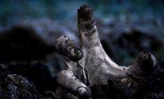 Вчені показали, що відбувається з тілом людини після смерті