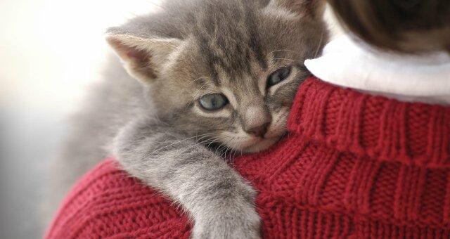 Кошки-долгожители: породы кошек, которые живут очень долго