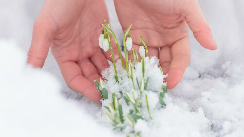 Домашні квіти для клумби, які потрібно сіяти в січні